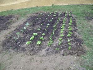 Έτοιμος και ο λαχανόκηπός μας! Δίπλα φτιάξαμε ένα κομμάτι ακόμη κήπου με σπόρους και βολβούς