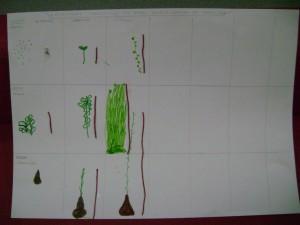 Παρατήρηση και καταγραφή της ανάπτυξης των φυτών, του κήπου μας, από τα παιδιά.