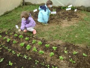 Τοποθέτηση πινακίδων με τα ονόματα των φυτών, σπόρων και βολβών που φυτέψαμε.