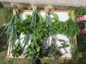 Και λαχανόκηπος χωρίς αρωματικά, δε γίνεται. Μαϊντανός, σέλινο, άνηθος, δυόσμος, μέντα, δάφνη, δενδρολίβανο και σκόρδο έχουν την τιμητική τους!