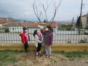 Τη φροντίδα και συντήρηση των δέντρων ανέλαβαν οι αντίστοιχες ομάδες.