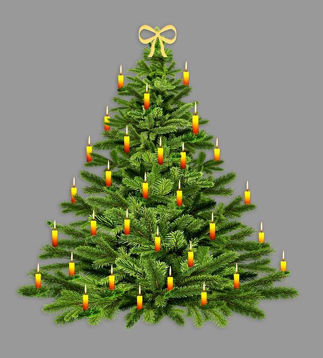 fir-tree-3774457_960_720