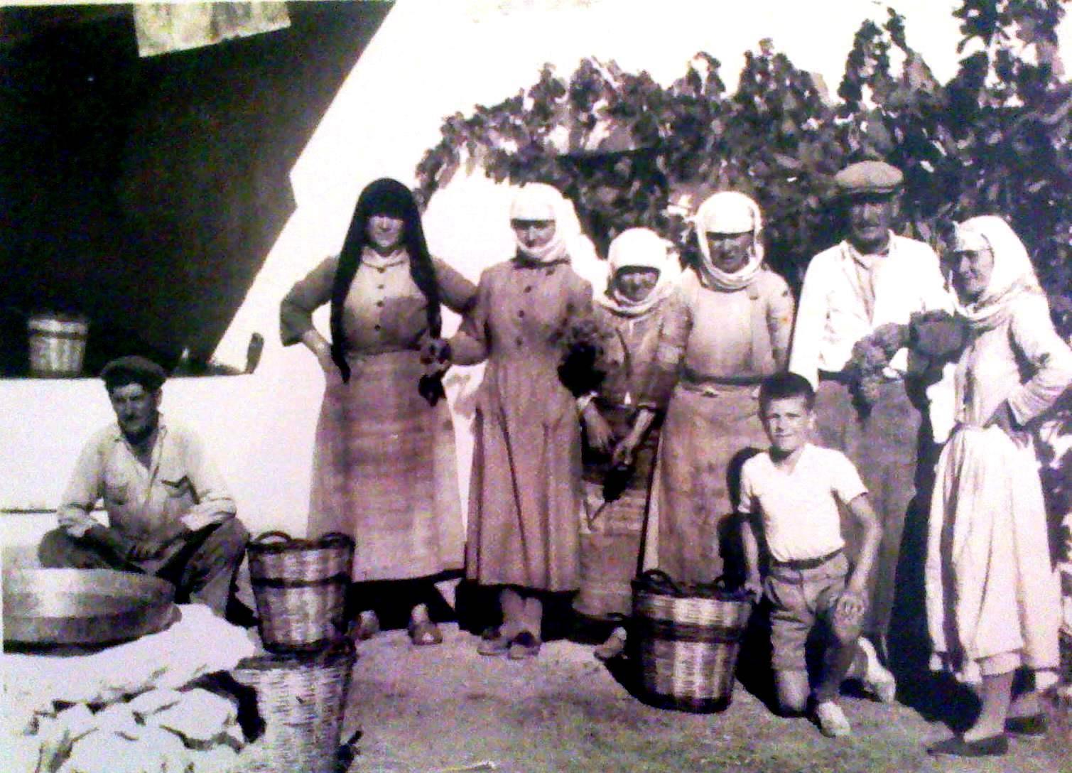 Μεγαρίτισσες και τρύγος 1955
