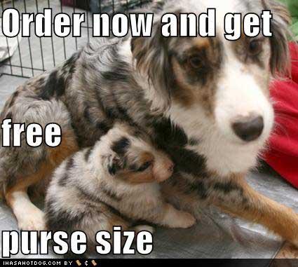 dog-free