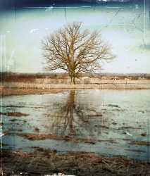 lonely-tree2.jpg