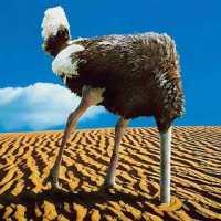 ostrich-757855.jpg