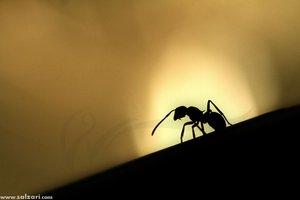 ant_by_salzari.jpg