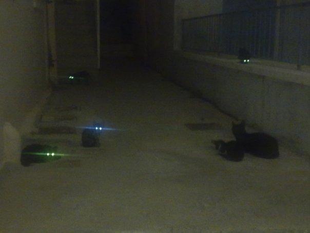 electric-cats.jpg