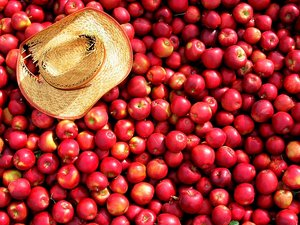 apples_by_dalan.jpg