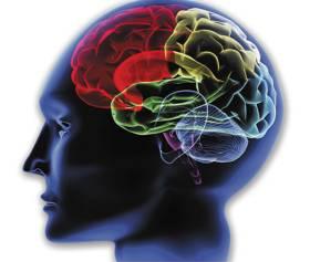 brain-co.jpg