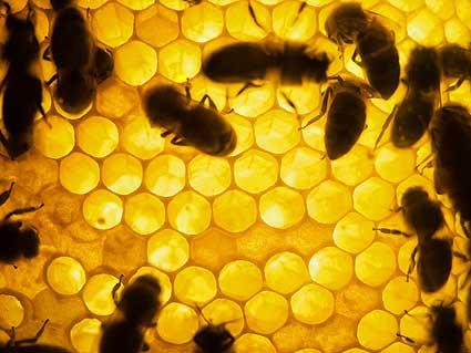 bees-in-hive.jpg